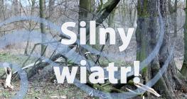 Ostrzeżenie meteorologiczne Nr 81 - Silny wiatr