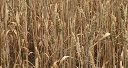 Koronawirus: Na co mogą liczyć rolnicy